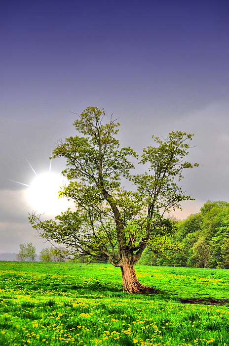 Spring Photograph - Spring Sun by Emily Stauring