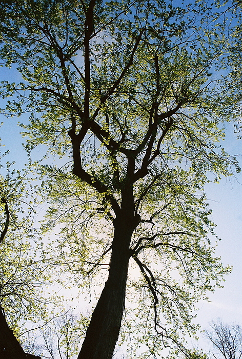 Tree Photograph - Spring Tree by Patrick Murphy