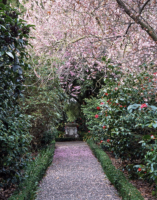 Path Photograph - Spring Walkway by Geoff Bryant