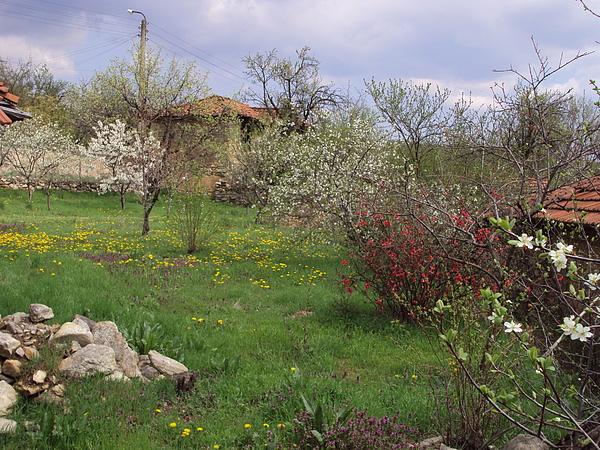 Landscape Photograph - Spring Yard by David Du Hempsey