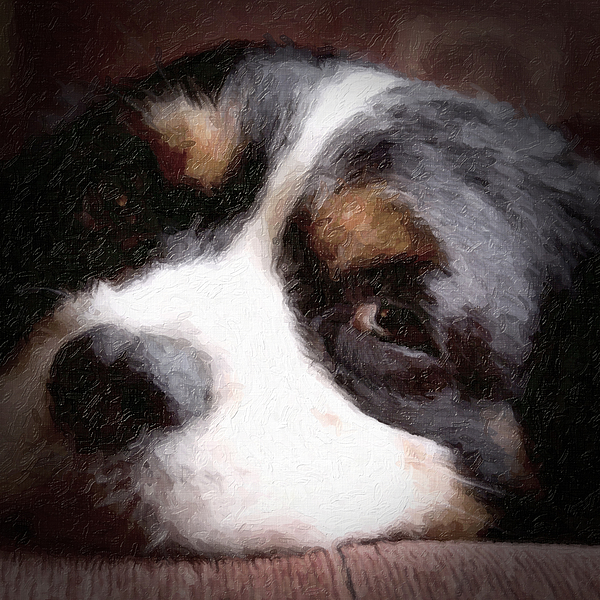 Dog Photograph - Springer Spaniel by Tom Mc Nemar