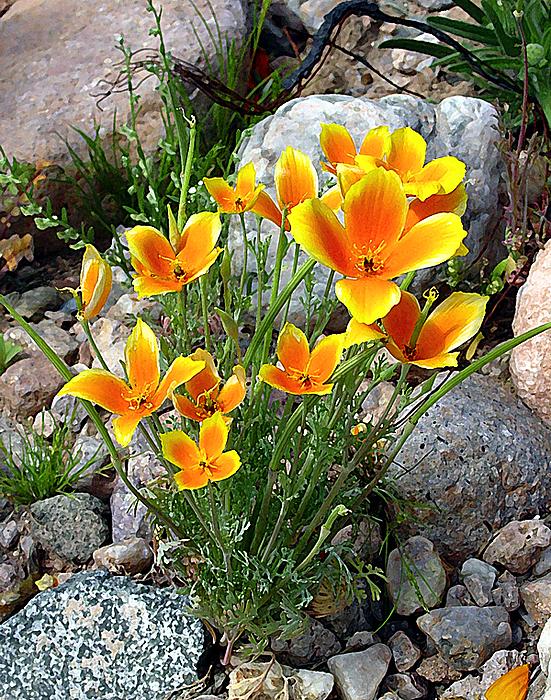 Flowers Photograph - Springtime by Richard Eller