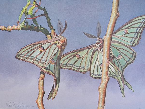 Stem Painting - Stained Glass Moth Of Spain by John Cody