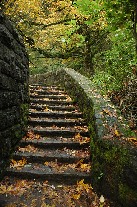 Fall Photograph - Stairway To Fall by Lori Mellen-Pagliaro
