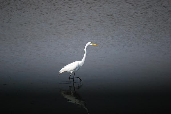 White Photograph - Stalking by John Roncinske