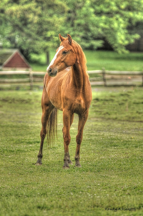 Horse Photograph - Stand Tall by Randy Ricketts