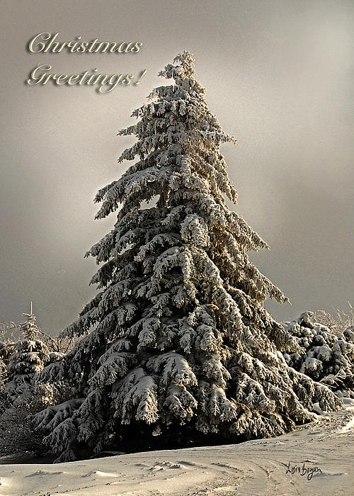 Christmas Photograph - Standing Tall Christmas Card by Lois Bryan