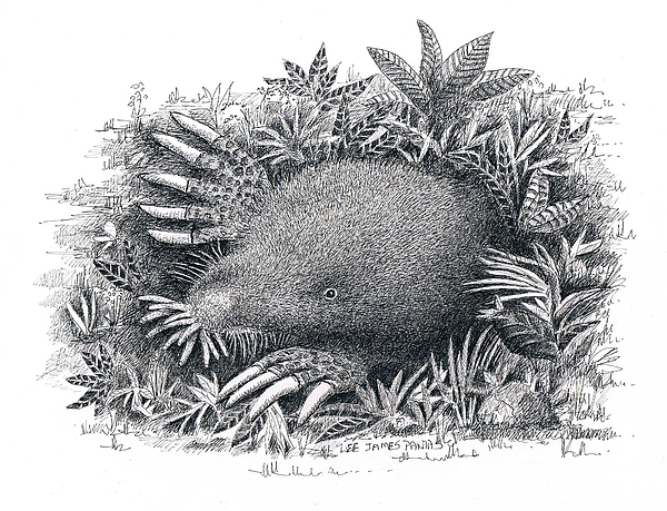 Mole Drawing - Star-nosed Mole by Lee Pantas