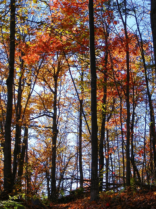 Trees Photograph - Stark Contrast by Dave Martsolf