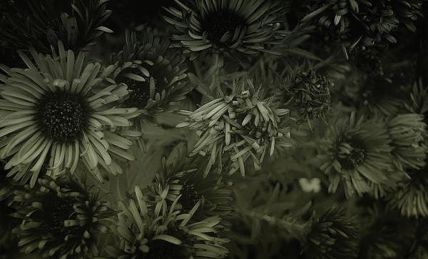 Flower Photograph - Stellarators by Marcus Hammerschmitt