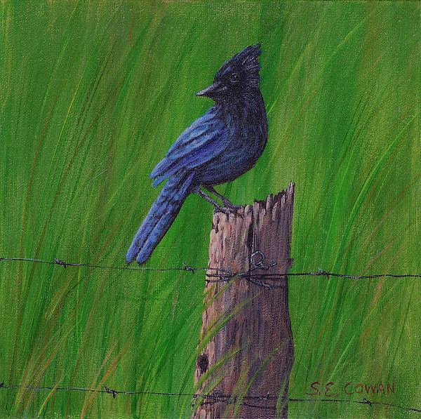Landscape Painting - Stellars Jay by SueEllen Cowan