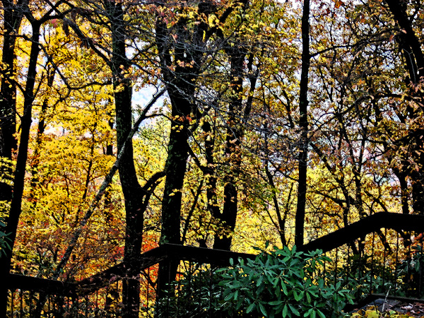 Fall Photograph - Steps by Beebe  Barksdale-Bruner