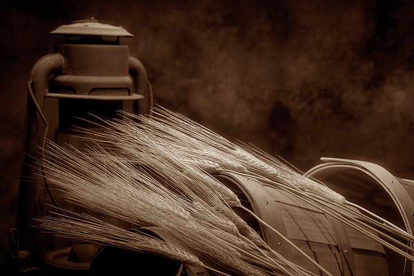 Wheat Photograph - Still Life With Wheat I by Tom Mc Nemar