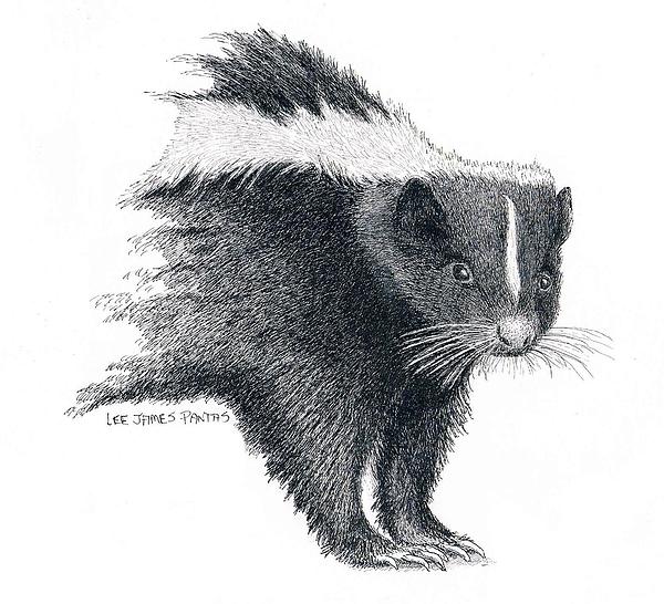 Skunk Drawing - Stiped Skunk by Lee Pantas