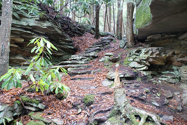 Nature Photograph - Stone Path by Heather Green