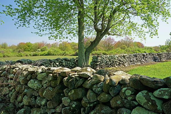 Stone Wall Photograph - Stone Wall In Rhode Island by Nancy De Flon