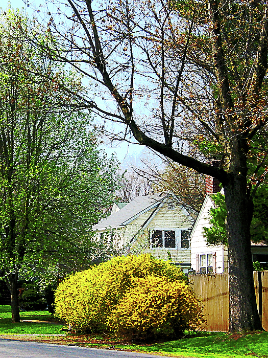 Spring Photograph - Street With Forsythia by Susan Savad