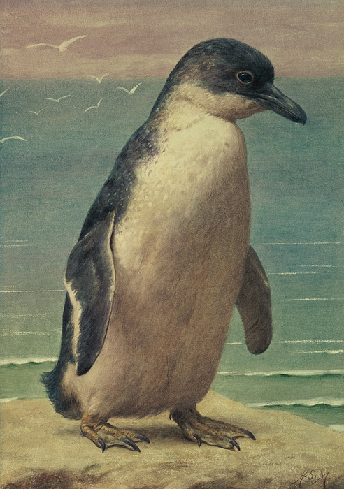 Study Painting - Study Of A Penguin by Henry Stacey Marks