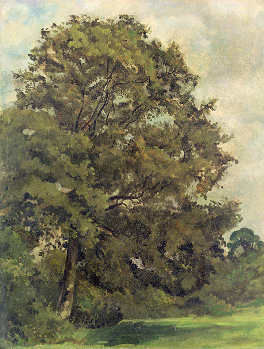 Study Photograph - Study Of An Ash Tree by Lionel Constable