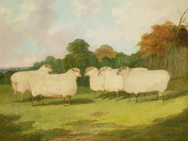 Study Painting - Study Of Sheep In A Landscape   by Richard Whitford