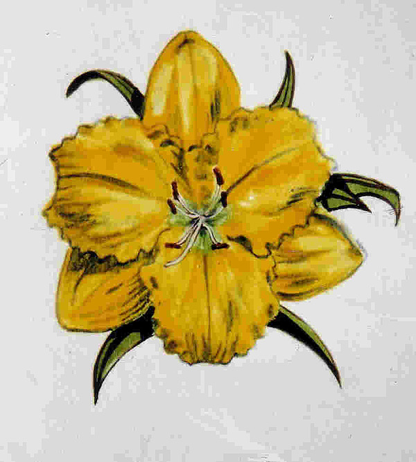 Daylily Painting - Summer Daylily by Dy Witt