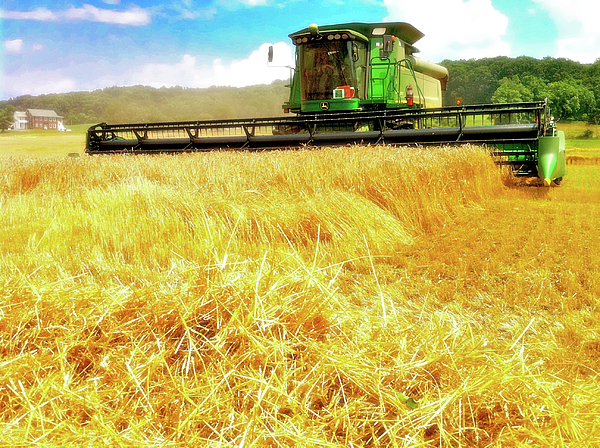Harvest Photograph - Summer Harvest by Kevyn Bashore