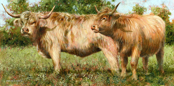 Longhorns Painting - Summer Longhorns by David Lyons