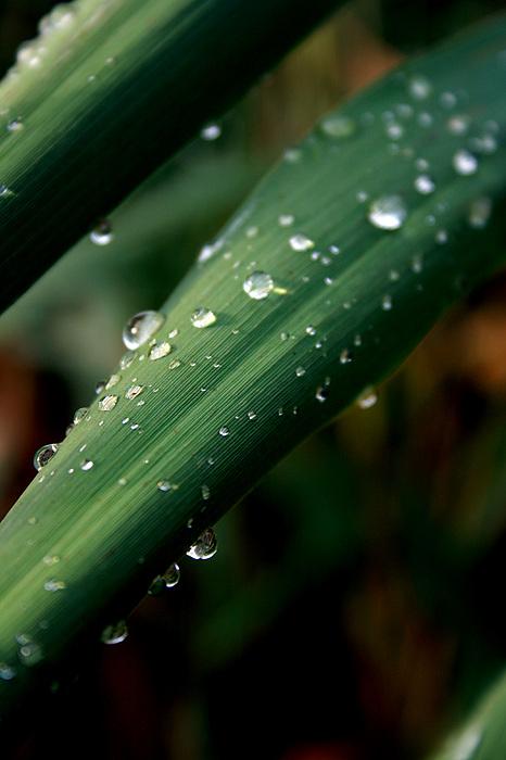 Photograph Photograph - Summer Rain by Alexandra Harrell