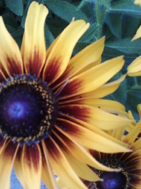Flowers Photograph - Summertime Beauty by Susanne Awbrey