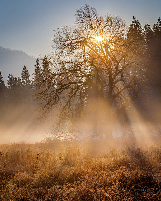 Yosemite Photograph - Sun Rays In Yosemite Ground Fog by Jeff Sullivan