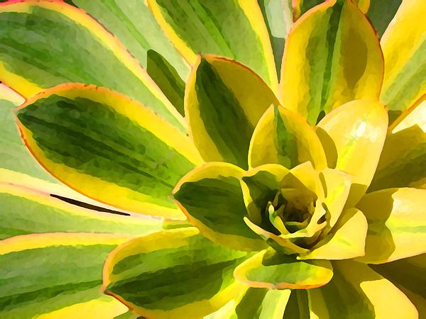 Landscape Photograph - Sunburst Succulent Close-up 2 by Amy Vangsgard