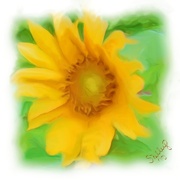 Sunflower Painting - Sunflower by Shelley Bain