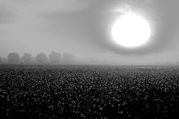 Mobile Digital Art - Sunrise And The Cotton Field Bw by Michael Thomas