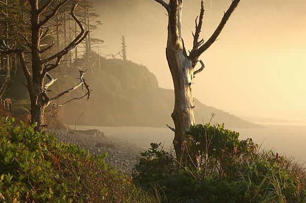 Landscape Photograph - Sunrise Haze by Lori Mellen-Pagliaro