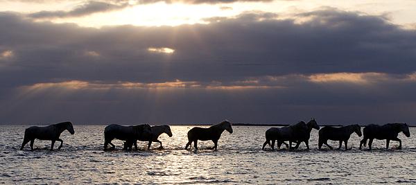 Horses Photograph - Sunrise Horses by Carol Walker