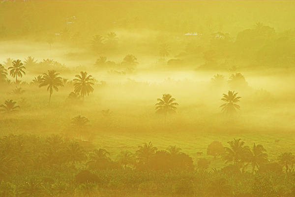 St Lucia Photograph - Sunrise On Mist In Roseau Valley- St Lucia by Chester Williams