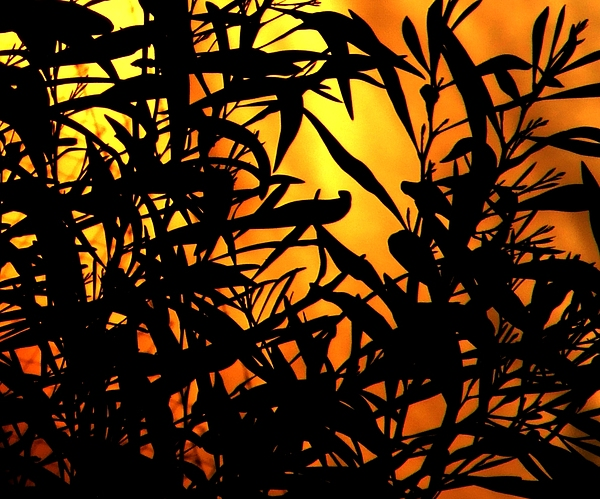 Sunset And Leaves Photograph by Bill Vernon