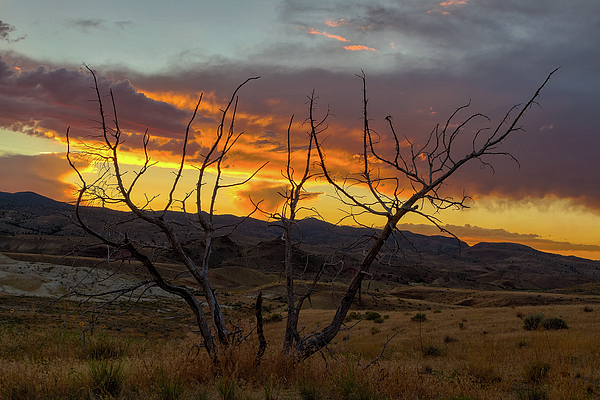 Sunset Photograph - Sunset And Petrified Tree by David Gn