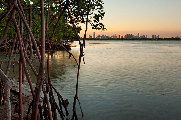 Miami Photograph - Sunset At Miami Behind Wild Mangrove Forest by Matt Tilghman