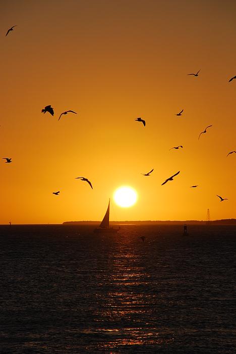 Sunset Photograph - Sunset Birds Key West by Susanne Van Hulst