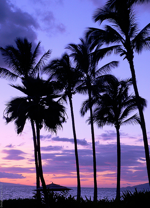 Palm Trees Photograph - Sunset On The Palms by Debbie Karnes