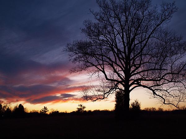Sunset Photograph - Sunset Tree by Michael Edwards