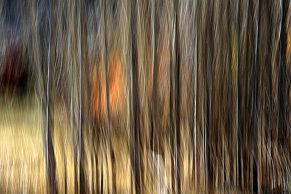 Trees Photograph - Support by Robert Shahbazi