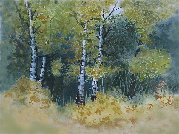 Birch Trees Painting - Surrounded By Greenery by Diane Ellingham