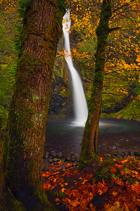 Horsetail Falls Photograph - Surrounded By The Season by Mike  Dawson