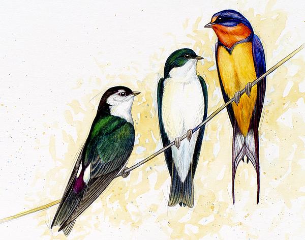 Swallow Painting - Swallows by Shari Erickson