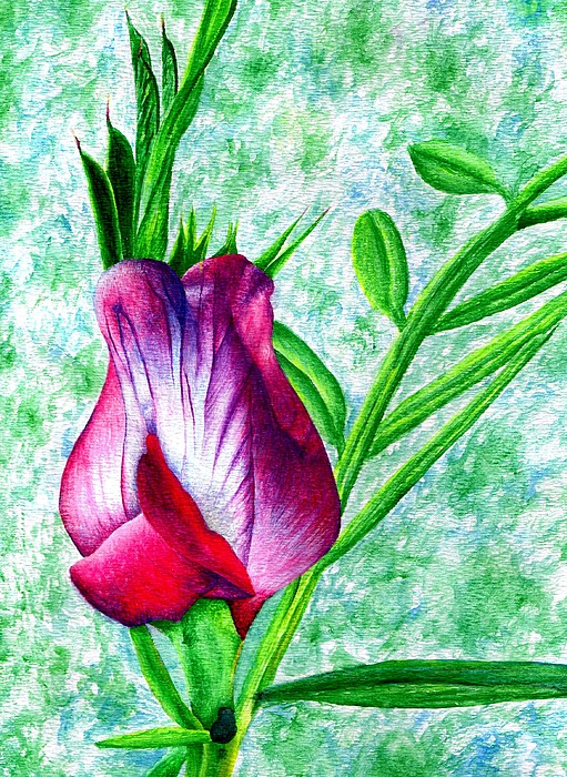 Sweet Pea Painting - Sweet Pea by Brandon Sharp