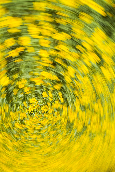 Flower Photograph - Swirling Flowers by Bob Coates