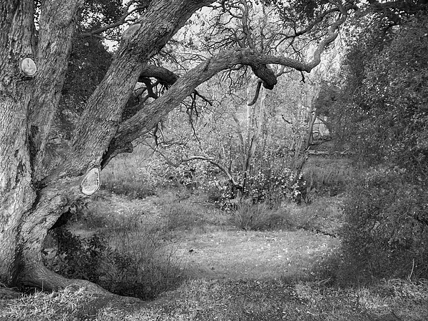 Landscape Photograph - Sycamore Grove Black And White by Karen  W Meyer