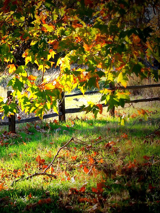 Fence Photograph - Sycamore Grove Fence 2 by Carol Groenen